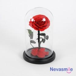 Eeuwige roos rode kleur onder koepel