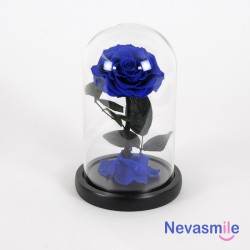 Preserved rose blue color...