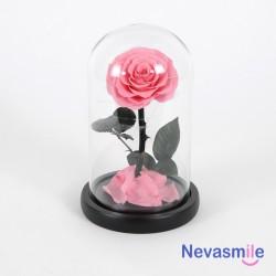Rose éternelle rose sous...