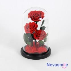 tres rosas rojas eternas en...